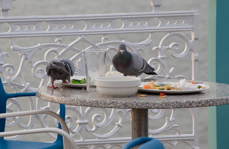 leftovers: Wild Pigeons feeding on scraps and left-overs at an outdoor cafe