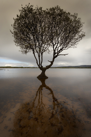 The tree at Kenfig nature reserve near Porthcawl, South Wales, UK
