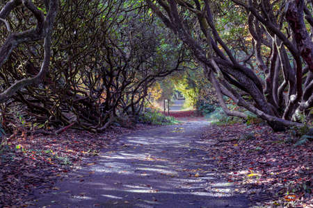 The rhododendron path to the second lake at Craig y Nos Country park in the Swansea Valley, South Wales UK.