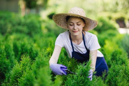 Kobieta używa narzędzi ogrodniczych do przycinania żywopłotu, ścinając krzewy nożycami ogrodowymi Zdjęcie Seryjne