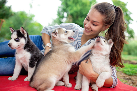 A beautiful smiling woman with a ponytail and wearing a striped shirt is cuddling with  three sweet husky puppies while resting on the red blanket on the lawn. Love and care for pets. Standard-Bild