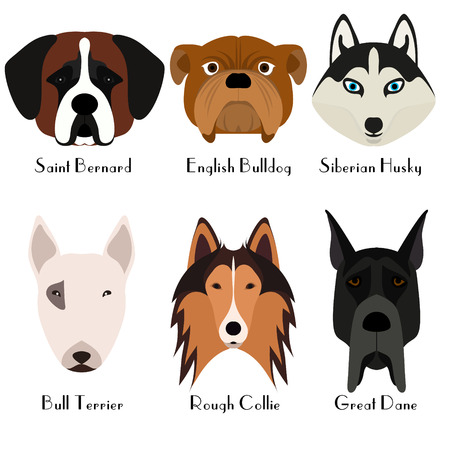 doggies: Set of 6 dogs head. Flat design. Pets. Cute doggies. Dog icon.  Cartoon character. Animals.