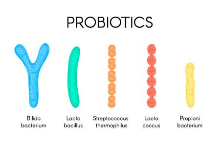 Probiotics. Lactic acid bacterium. Bifidobacterium, lactobacillus, streptococcus thermophilus, lactococcus, propionibacterium. Microbiome. Microbiota. Gastrointestinal health. Medical research. Vector Illustration