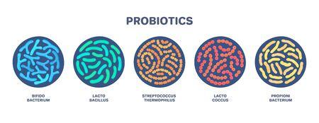 Probiotics. Lactic acid bacterium. Bifidobacterium, lactobacillus, streptococcus thermophilus, lactococcus, propionibacterium. Microbiome. Microbiota. Bacteriology. Gastrointestinal health. Vector