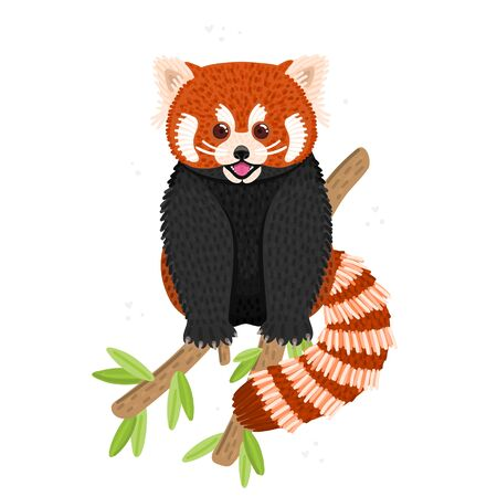 Red panda. Cute fluffy animal sits on branch. Endangered species. Character design. This can be used for postcard, cover, invitation and flyer to the zoo, printing on clothes. Vector illustration Ilustrace