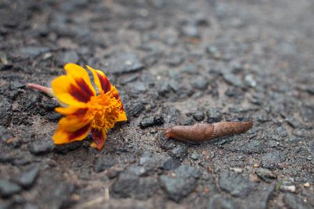 babosa: babosa, caminar, hacia, una flor