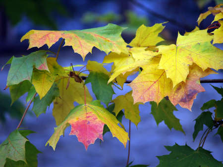 autumn leaves Stock Photo - 584138