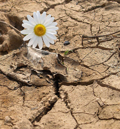 cracked earth and daisy       photo