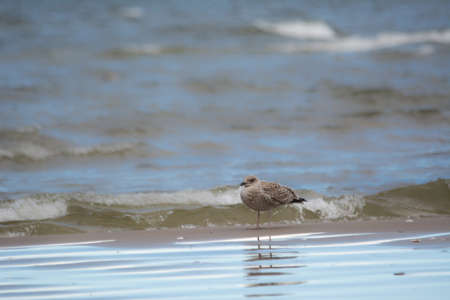 bird walking under Baltic sea.