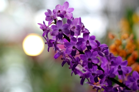 Blooming Orchids photo