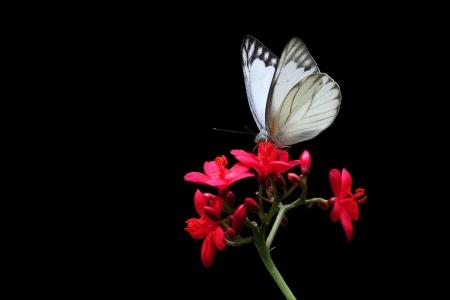 animal vein: Beautiful Butterfly on a Flower Stock Photo