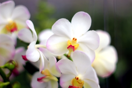 Blooming Orchids in the Garden photo