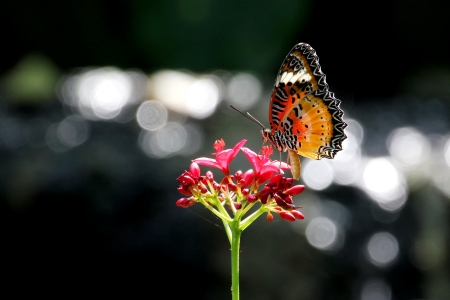 Beautiful butterfly in the natural photo