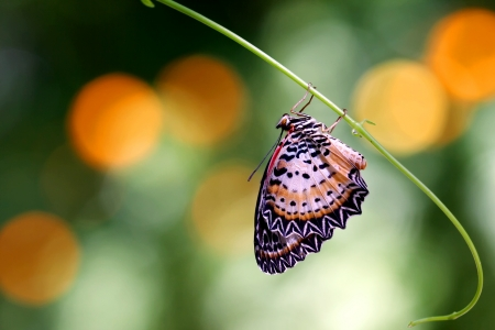 Beautiful butterfly in the natural Stock Photo