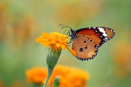 A butterfly on beautiful flower photo