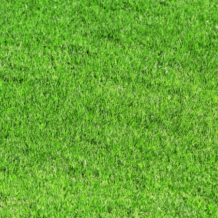 Green grass as background or texture photo