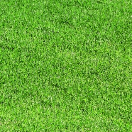 Groen gras als achtergrond of textuur