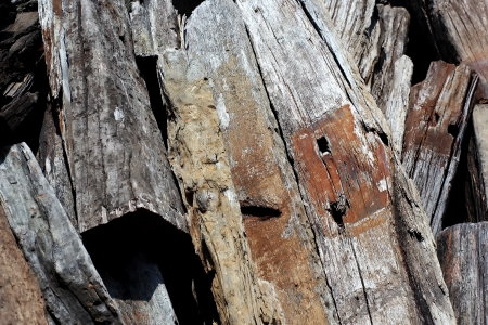 Old timber background or texture Stock Photo