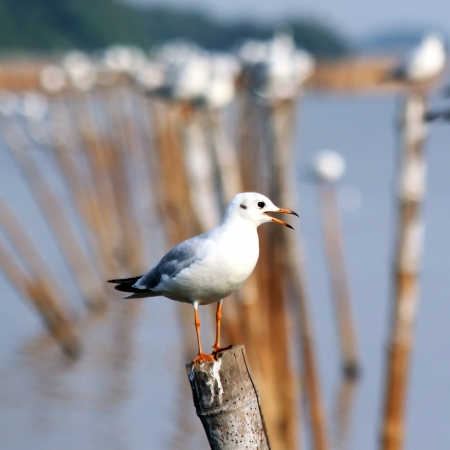 Seagull sitting on a pole Stock Photo