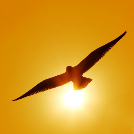 The silhouette of flying seagull Stock Photo