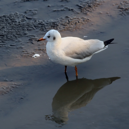 Seagull standing on the ground