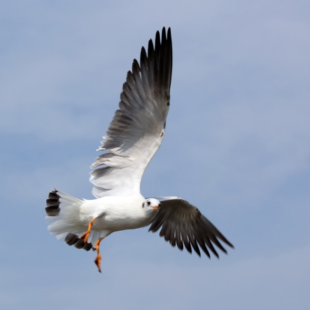 Flying seagull on beautiful sky background