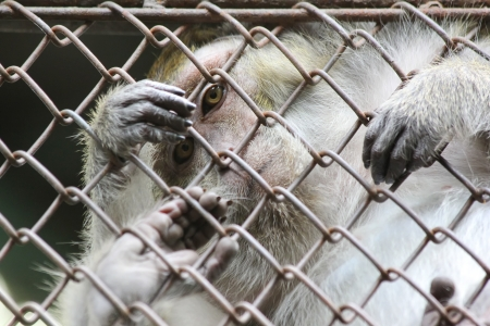 monkey in the cage of zoo photo