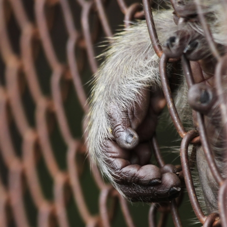 monkey hand out from the cage of zoo photo