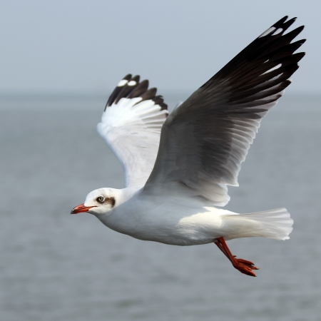 Flying seagull on beautiful sky background photo