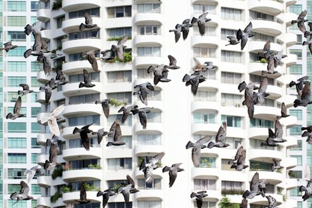 group of flying pigeon with building