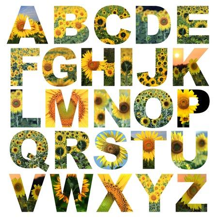 tipos de letras: alfabeto de la A a la Z hecha de loto imagen de la flor