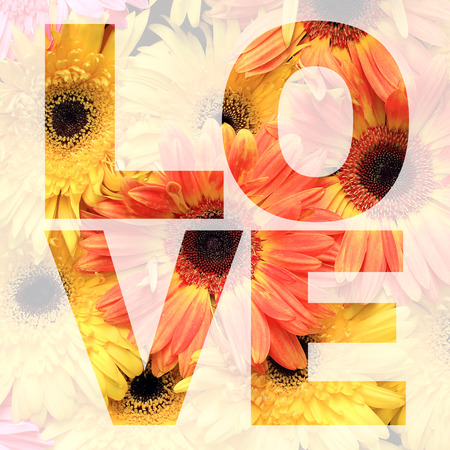 barberton daisy: word love made from gerbera or Barberton daisy flower picture Stock Photo
