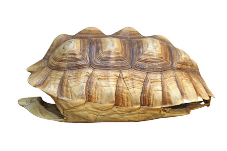 sulcata: african spurred tortoise or geochelone sulcata shell isolated on white background