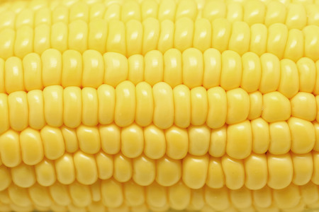 closeup of  sweet corns as food background