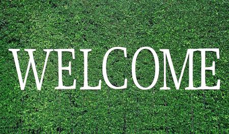 acogida: blanco palabra de bienvenida en el fondo �rbol verde