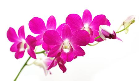 白い背景に分離された美しい蘭の花 写真素材