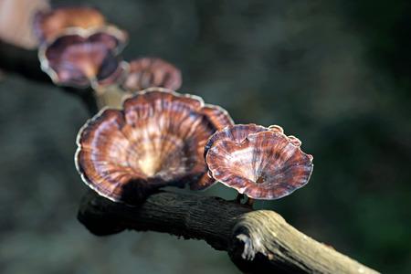 fungi: fungi mushroom on a decay tree trunk