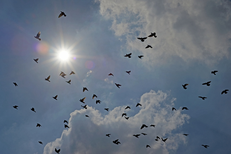 group of flying pigeon against beautiful sky Stock Photo