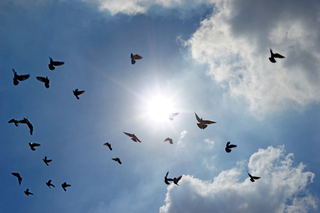homing: group of flying pigeon against beautiful sky Stock Photo