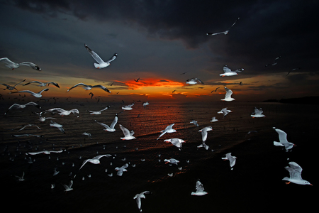 group of flying seagull bird on beautiful sky background