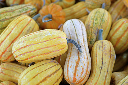 A large group of carnival squash pumpkin