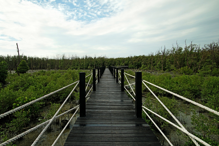 long wooden bridge walkway into mangrove forest