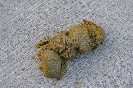 closeup of  fresh elephant dung excrement on ground Stock Photo