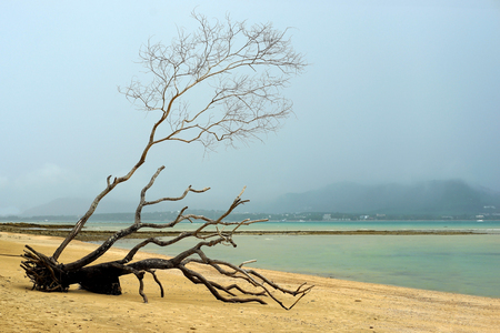 dead tree on tropical beach with beautiful sky background Stock Photo