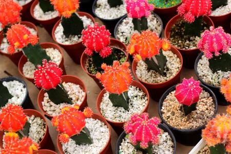 pile of beautiful cactus in flower shop