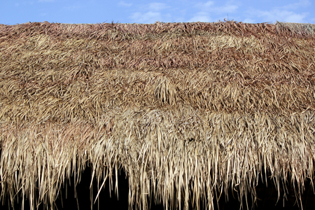 thatched roof of a cottage made from dry grass as background
