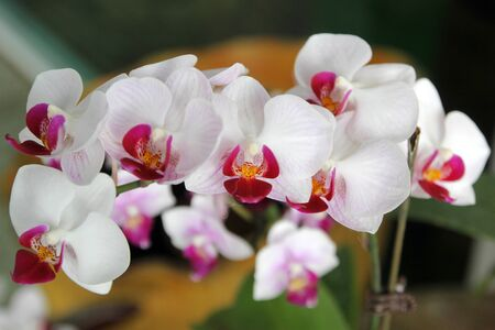 closeup of beautiful orchid flower in garden