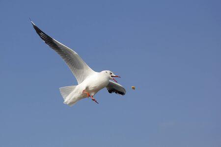 photo of flying seagull bird on beautiful sky background