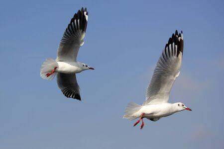 photo of flying seagull bird on beautiful sky background Banco de Imagens