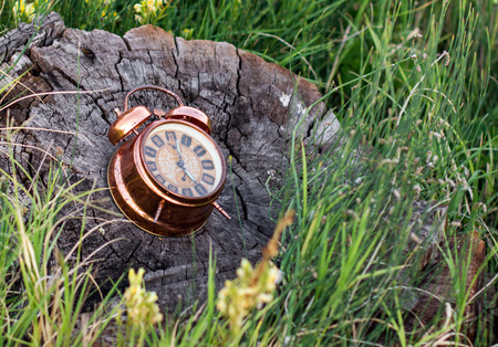 ringer: Old clock with arrows and ringer bells lying on a tree stump